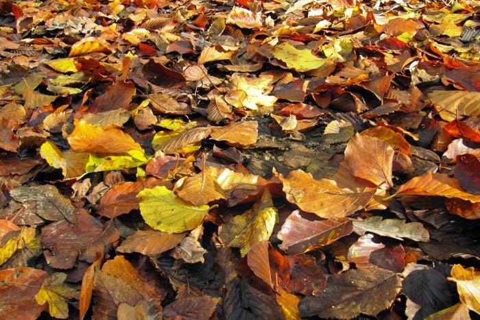 Tóm tắt Mùa lá rụng trong vườn